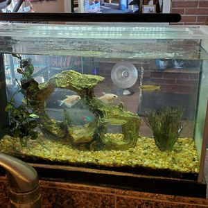 5 Gallon Fish Aquarium, Heater, Filter, Light. Everything To Get Started for Sale in Ontario, CA