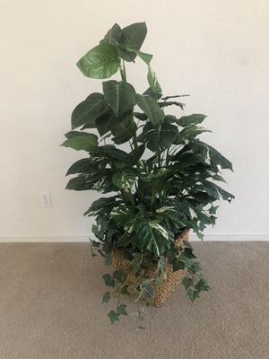 Flower stand/vases/plant for Sale in Visalia, CA