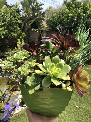 Variety of succulent plants in a beautiful pot for Sale in Los Angeles, CA
