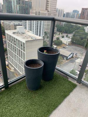 Grey flower plants for Sale in Atlanta, GA