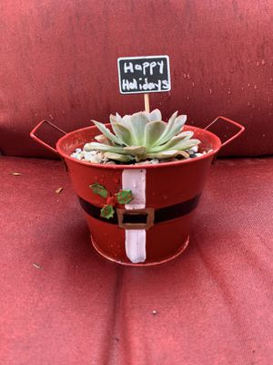 Holiday Arrangements for Sale in Homestead, FL