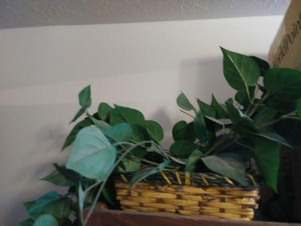 2 fake decorative plants in brand new condition