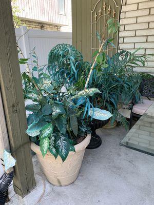 Decor plants for Sale in Salt Lake City, UT