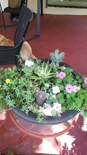 Succulent and plant garden for Sale in Lake Wales, FL