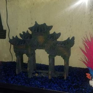 50 Gallon Fish Tank for Sale in Waldorf, MD