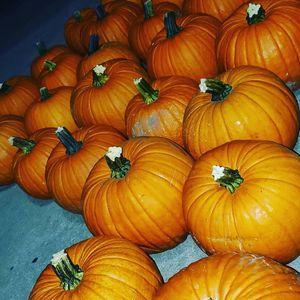 pumpkins for Sale in Stockton, CA