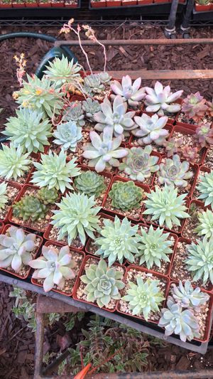 BEST PRICED SUCCULENTS CACTI PLANTS POTS POTTER VINTAGE IN LOS ANGELES EL SERENO for Sale in Los Angeles, CA