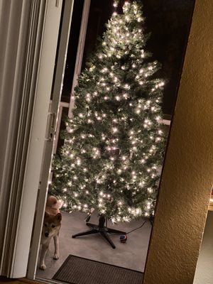 Christmas Tree (7 Feet & With Lights) for Sale in Four Corners, FL