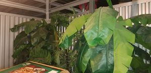 3 silk plants 1 bamboo 2 palms used 8 foot for Sale in Fort Lauderdale, FL