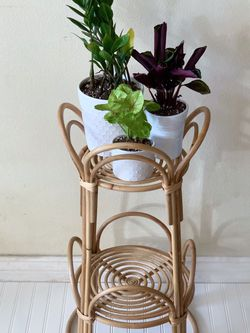 Boho Wicker Bamboo Plant Stand Plants for Sale in Los Angeles,  CA
