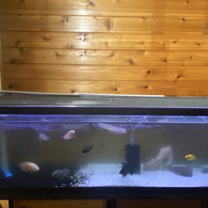 Fish Tank 135 Gallon 6 Ft Wide for Sale in Manchester Township, NJ