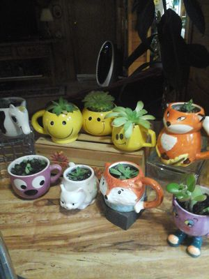 Plants in a cup. (SUCCULANTS ) $3 @ for Sale in Lakeside, AZ