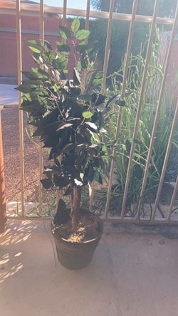 Fake Plant for Sale in Tucson,  AZ