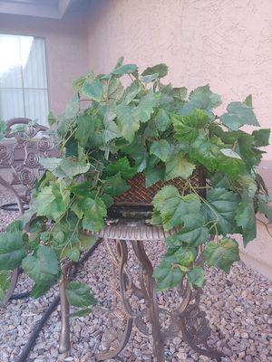 Fake plant for Sale in Mesa, AZ