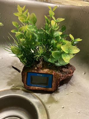 Fish tank plants for Sale in Monterey, CA