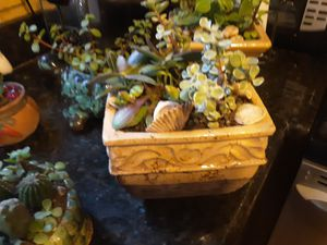 Adorable succulent pot with aptenia and elephant bush for Sale in Chandler, AZ