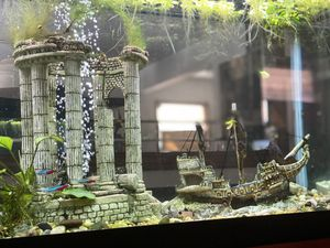 75 Gallon Fish Tank Complete Set Up for Sale in Monrovia, CA