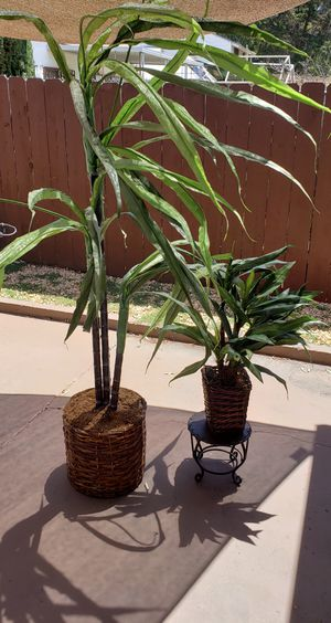 Fake indoor/outdoor plants for Sale in San Diego, CA