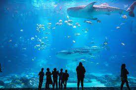 Georgia aquarium for Sale in Atlanta, GA