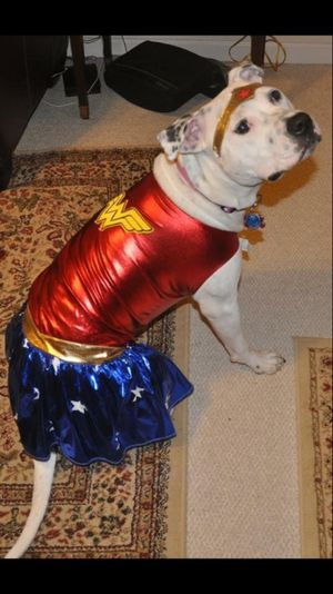 Rubie's XL Wonder Woman Halloween Costume For Dogs DISCLAIMER: I AM NOT SELLING THE DOG for Sale in Rockville, MD
