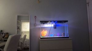 30 gallon fish tank tall & long for Sale in Herndon, VA
