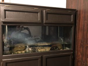 75 gallon tank and stand for Sale in Vallejo, CA