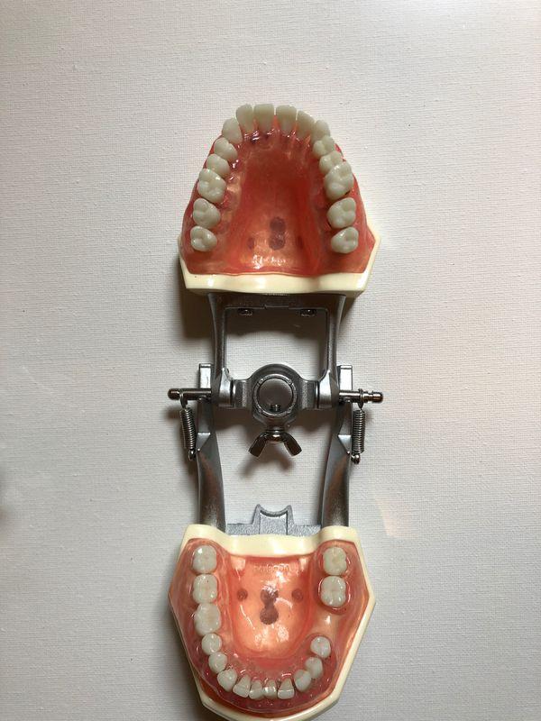 Perio typodont