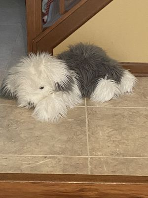 Old English Sheepdog Stuffed Animal. From FAO Schwarz for Sale in North Aurora, IL
