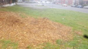 Free wood chips for Sale in Tacoma, WA