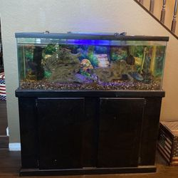 Fish Tank / Fish / Food / Chemicals for Sale in Moreno Valley,  CA