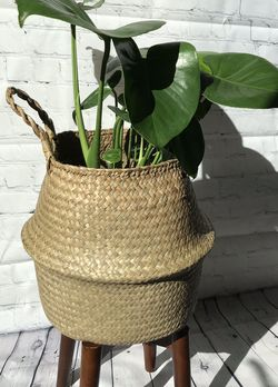 monstera 3 gallon plastic pot w/ basket + stand for Sale in San Francisco,  CA