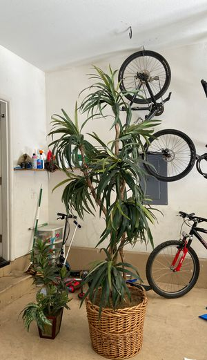 Fake plants for Sale in Chula Vista, CA