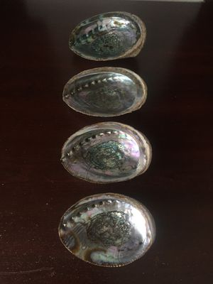 Abalone Shells for Sale in Bend, OR