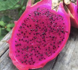 Red Purple Dragon Fruit Tree for Sale in Santa Ana, CA