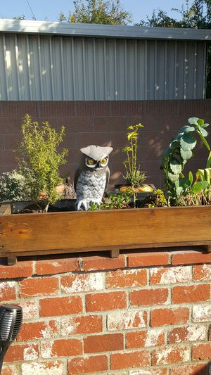 Solid wood plant WINDOW BOX WITH PLANTS for Sale in Norwalk, CA