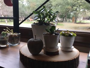 Succulents for Sale in Austin, TX