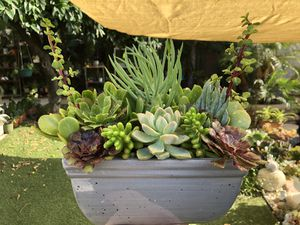 Very beautiful succulent arrangement in a beautiful ceramic pot for Sale in Los Angeles, CA