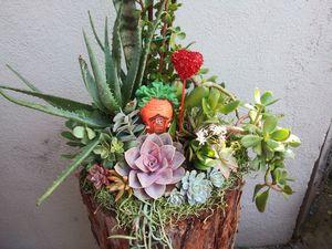 Succulents en tronco grande for Sale in Bell, CA