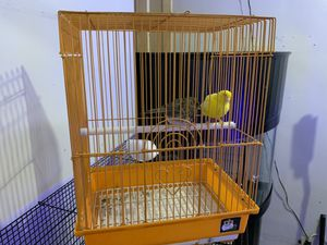 Bird cage for Sale in The Bronx, NY