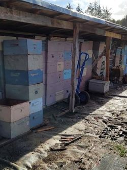 Going Out Of Business. Selling Beekeeping Supplies for Sale in Gresham,  OR