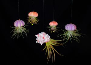 Set of 5 Hanging Air Plants for Sale in Las Vegas, NV