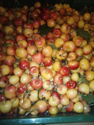 Fresh Rainier Cherry 18 lbs for Sale in Stockton, CA