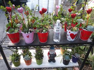 Succulents en cubetitas for Sale in Bell Gardens, CA