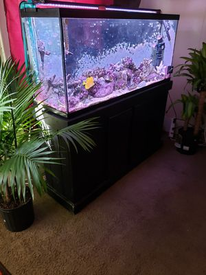 55 gallon saltwater setup for Sale in Lorain, OH