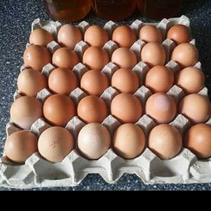 Chicken Eggs Amish Farm for Sale in Palos Park, IL