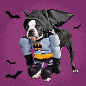 Batman dog costume for Sale in San Antonio, TX
