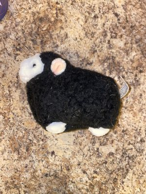 Black sheep for Sale in Tucson, AZ