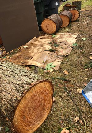 4 large trees for sale cut today and can deliver for extra $! for Sale in Puyallup, WA