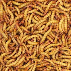 Mealworms for Sale in Glendora, CA