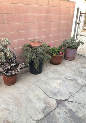 Plants and succulents in pots for Sale in Upland, CA